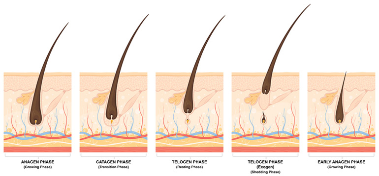 Dr. Kayihan Sahinoglu | The Three Stages Of The Hair Growth Cycle